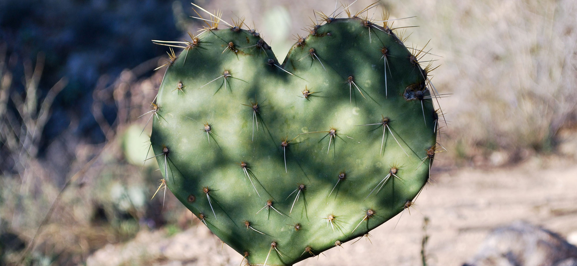 Photo of a cactus